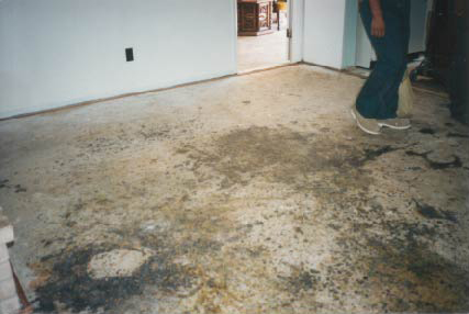 Heavy mold contamination beneath the carpet pad on the concrete slab. This was the result of a plumbing leak which flooded the home.